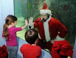 Diving Santa at Mystic Aquarium.  Photo courtesy of Mystic Aquarium